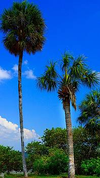 Palms and Blue Sky by Paul Wilford