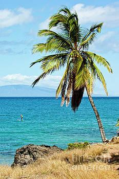 Palms on Hawaiian beach 12 by Micah May