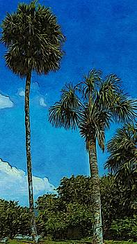 Palms by Paul Wilford