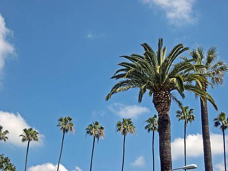 Palms by Sean Owens