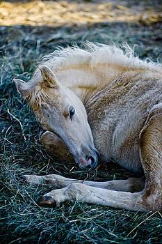 Palomino foal by Jesska Hoff
