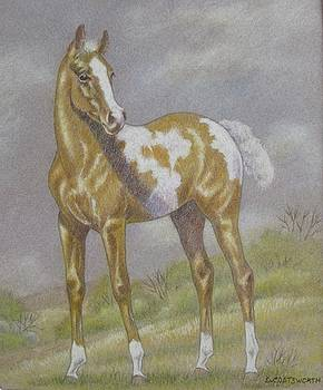 Palomino Paint Foal by Dorothy Coatsworth