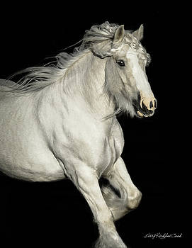 Palomino Portrait by Terry Kirkland Cook