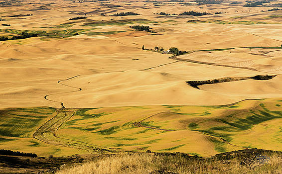 Palouse 19 by Claude Dalley