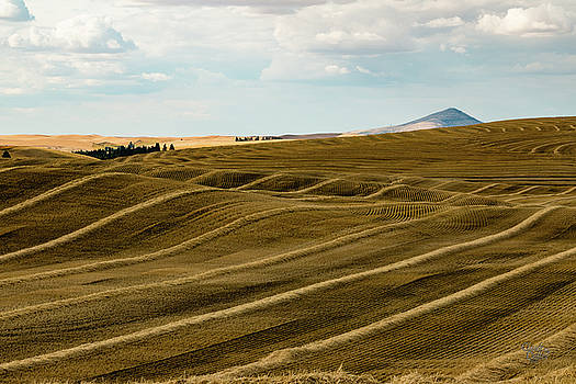 Palouse 23 by Claude Dalley