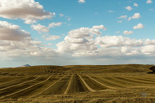 Palouse 31 by Claude Dalley