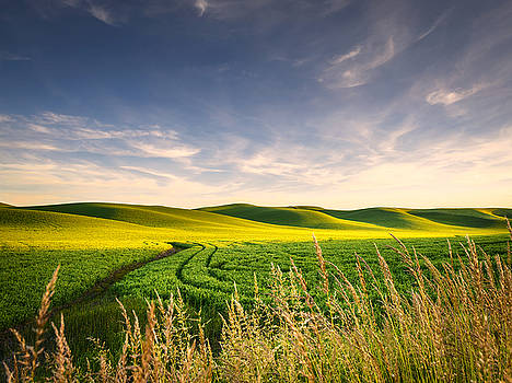 Palouse Bounty by Dan Mihai
