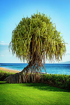 Pandanus Tree by Kelley King