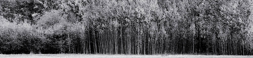 Panorama Trees by Rick Lawler