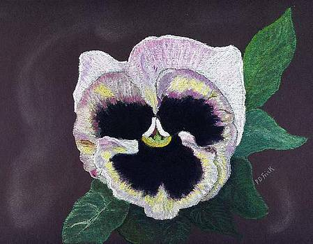 Pansy by Diane Frick