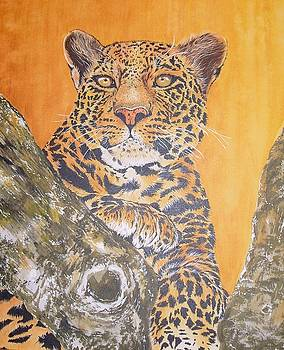 Panther in Tree by Frances Evans