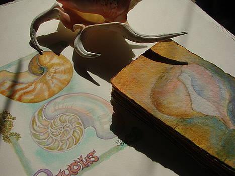 Papery Rapa Shell by Phyllis OShields