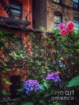Paradise by the Backyard Gate - City Garden by Miriam Danar
