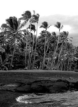 Paradise in Black and White by Halle Treanor