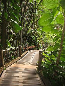 Paradise Pathway by Halle Treanor