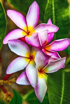 Paradise Pink Plumeria by David Millenheft