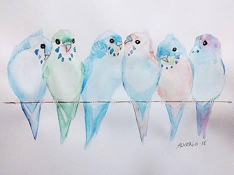 Parakeets by Edwin Alverio