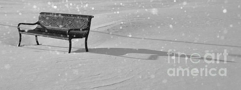 Park Bench in Virgin Snow by Lilliana Mendez