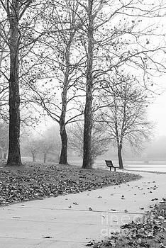 Park Bench on a Foggy Morning by Tamara Becker