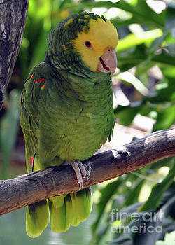 Parrot 2 by Lydia Holly