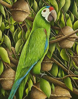 Parrot in Brazil Nut Tree by Mary Ann King