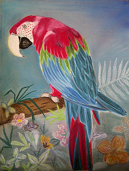 Parrot by Iven Maniscalco