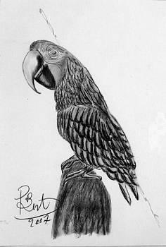 Parrot by Paul Bonnie Kent