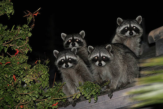 Party of Five on the Roof Top by Nina Prommer
