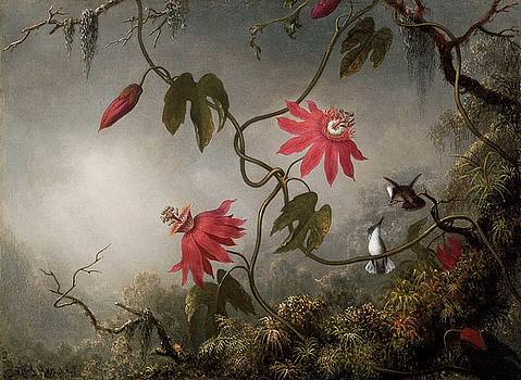Passion Flowers and Hummingbirds by Johnson Heade