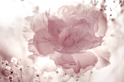 Jenny Rainbow - Passion for Flowers. Delicate Touch