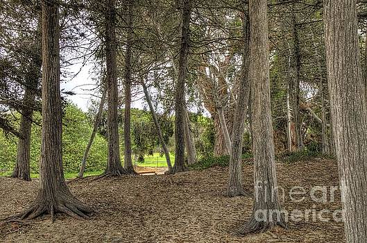 Past the Beach and Through the Trees by Matthew Hesser