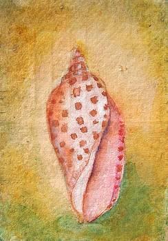 Pastel Junonia Volute Shell by Phyllis OShields