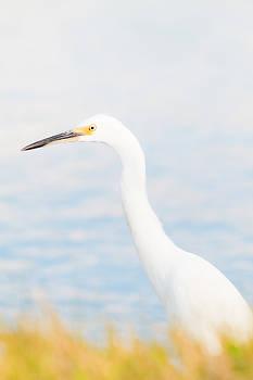 Michael McStamp - Pastel Light Egret