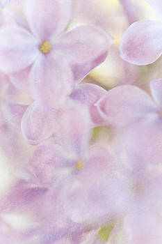 Jenny Rainbow - Pastel Lilac