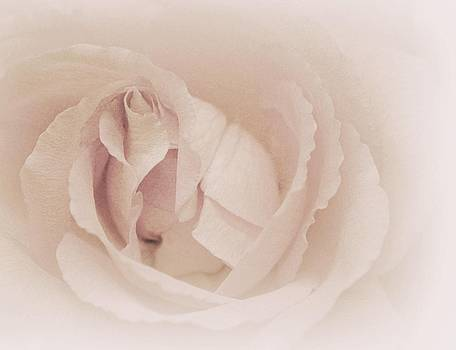 Pastel Petals of Rose by The Art Of Marilyn Ridoutt-Greene