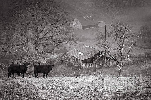 Pasture Field and Barns by Thomas R Fletcher