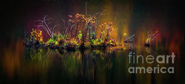 Patch Of Color by Doug Sturgess