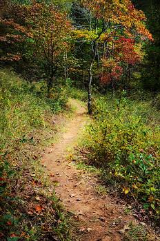 Path in the Prairie by Diana Boyd