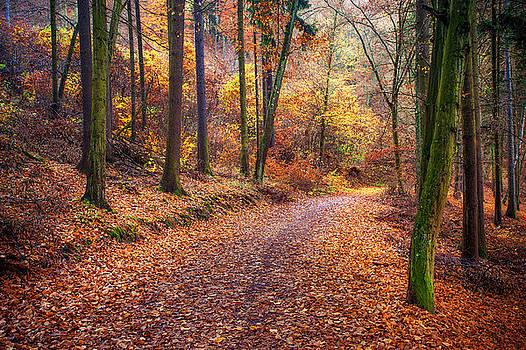 Jenny Rainbow - Path Through the Colorful  Autumn