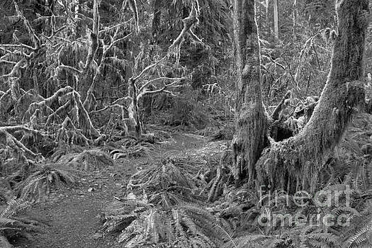 Adam Jewell - Path Through The Hoh Black And White