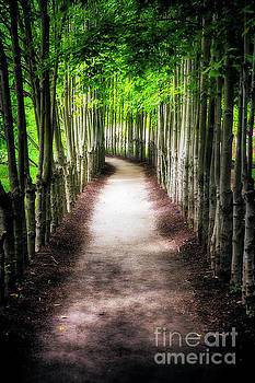 Path To My Destination by George Oze