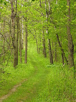 Path to Serenity  by Lori Frisch