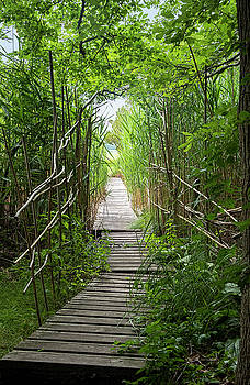 Path to the Marsh by Lee Fortier