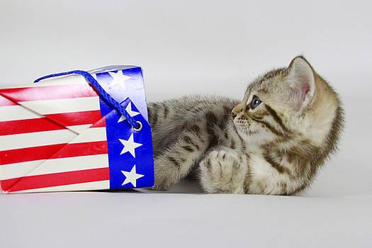 Patriotic Kitten by Shoal Hollingsworth