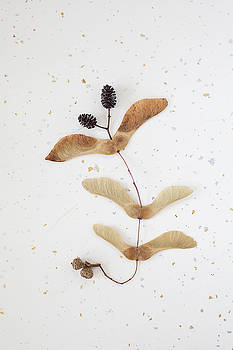 Pattern of Autumn Seeds by Bernice Williams
