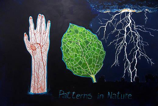 Patterns in nature by Lazaro Hurtado
