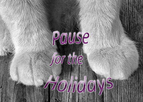 Pause for the Holidays by Kathi Mirto
