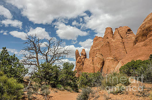 Peace in Arches National Park by Sue Smith