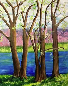 Peace Valley Park by Marita McVeigh