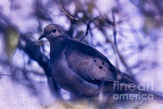 Peaceful Dove by Ella Kaye Dickey